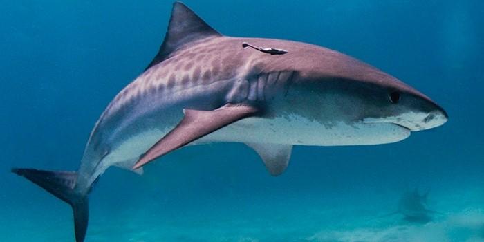 Kleine letteren naar de haaien