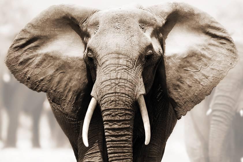 Stel je eens voor dat je een walvis of een olifant bent